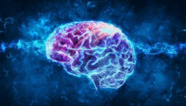 כוח המוח - rendering-of-a-brain