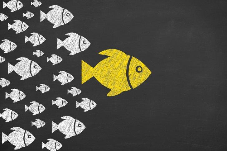 ללמוד כמו דג במים - leadership-concepts